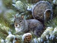 Een mooie grijze eekhoorn - Huisdieren. Een prachtige eekhoorn. De grijze eekhoorn is een zoogdiersoort uit de eekhoornfamilie.