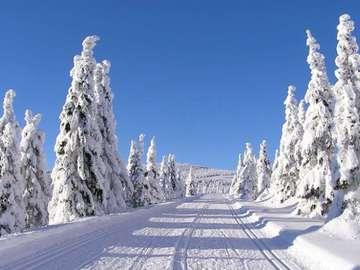 inverno in montagna - inverno in montagna, strada, abeti rossi