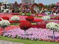 Dubai, grădina de flori