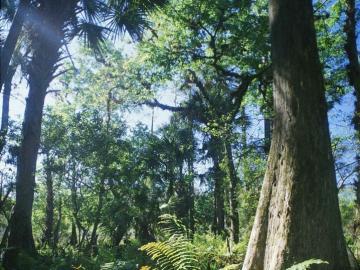 krajobraz - krajobraz, egzotyka, las