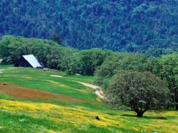 górska łąka - górska łąka, krajobraz