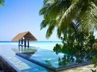 Malediwy - Malediwy. Urlop na Malediwach. Malediwy, alediwy, alediwy. Malediwy , Malediwy , Malediwy. Urlop na