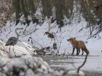 Állatok a téli erdőben