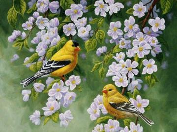 Yellow birds. - Animals. Yellow birds.