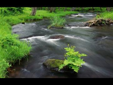 leśny strumyczek - leśny strumyczek, drzewa, trawa