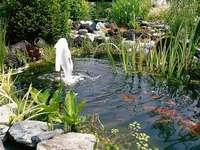 Pond. - A garden pond.