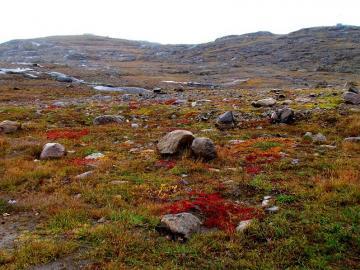 Kolorowa Tundra. - Krajobrazy. Kolorowa tundra.