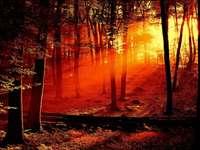 solstrålar - solstrålar