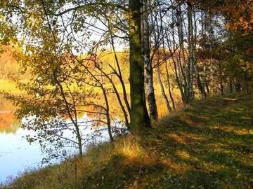 nad stawem - złota jesień nad wodą