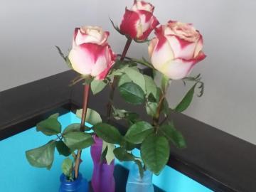 Takie sobie kwiatki.. - Takie sobie kwiatki.. ładnie. Czy to białe róże?