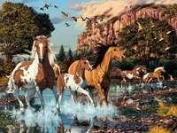 Vackra hästar. -  Går i naturen.