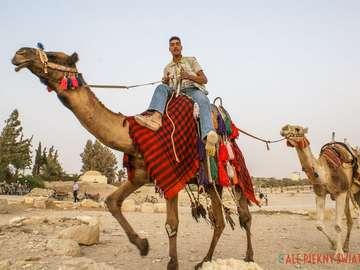 Wielbłądy na Saharze. - Sahara. Wielbłądy na Saharze.