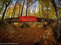 réserve naturelle - Réserve naturelle de montagne de Barania