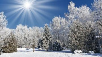 A wonderful picture of winter - Trees and fields covered with snow