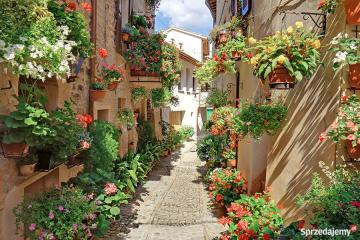 picturesque street - Picturesque alley ....