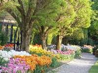 A tulipánok között