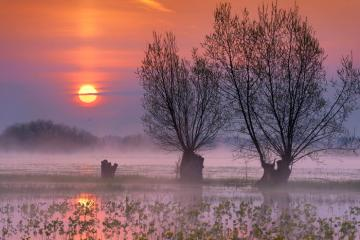 sunrise over swamps - sunrise over swamps