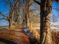 Droga ze szpalerem drzew - Droga ze szpalerem drzew