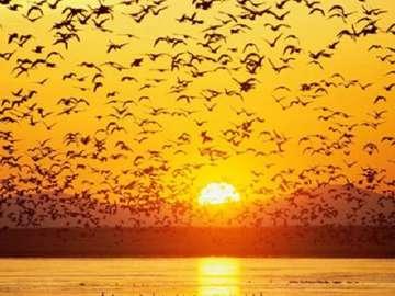 Sonnenuntergang - Schwieriges Rätsel Sonnenuntergang