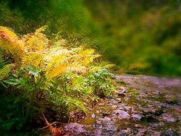 Leśne paprocie jesienią .