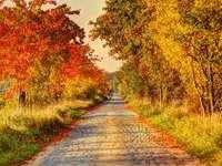 Őszi fák, őszi levelek
