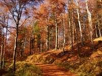 paysage d'automne - paysage d'automne, forêt