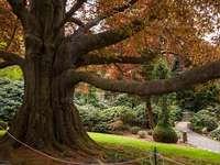 Grande albero - Albero nell'arboreto. Puzzle difficile.
