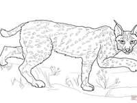 Lynx of varkensvlees