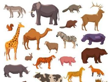Animals - Exotic and domestic animals.