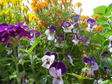 Color de las flores - Diferentes colores son hermosos