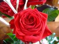 rózsák rózsák énekeltek