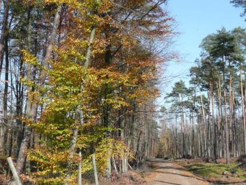 widoczek - bonita vista del bosque