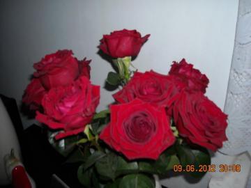 roses rouges vives - roses que j'ai eu en cadeau