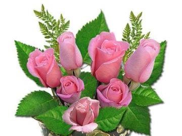 Ein Strauß rosa Rosen. - Die schönsten Blumen sind Rosen.