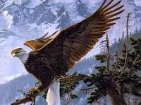 Górski orzeł - Zwierzęta. Ptak. Orzeł.