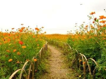 landscape - landscape, fenced path through fields