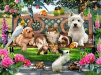 Adorable pets on the bench. - Puzzle for children: pets.