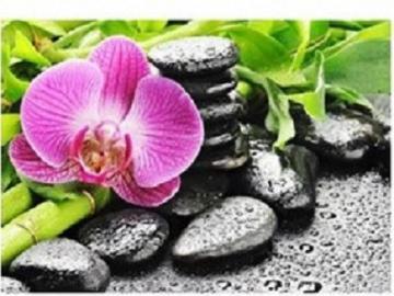 Orchidées et galets - Orchidées et galets