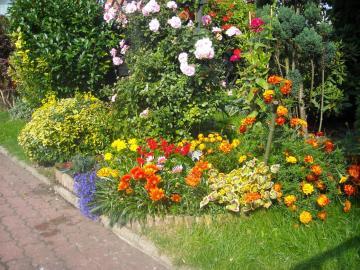 flowers in the garden - my flowers in the garden