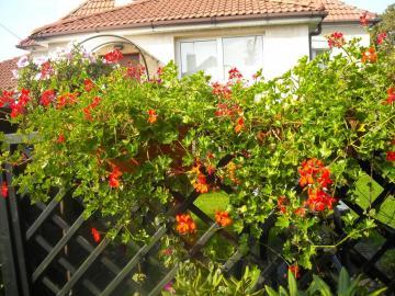 fiori nel giardino - i miei fiori nel giardino