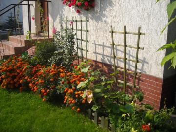fiori nel giardino - c'era un bellissimo giardino