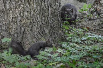 panorama - fun with a cat and a squirrel