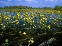 paisagem - Os lugares mais bonitos da Polônia. Paisagem, parque nacional de biebrza. Cudze chwalicie, wego.