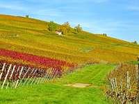 Winnice ,winnice i winnice