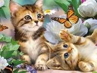 Katten en vlinders