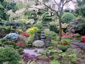 ogród japoński do prezi - ogród japoński, drzewa rośliny itp