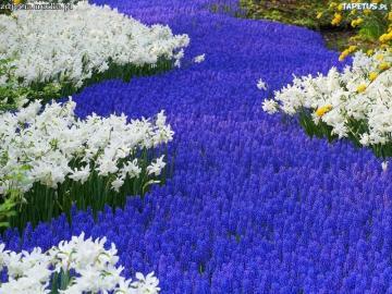 Ein schöner Blumenteppich - Ein schöner Teppich mit Blumen