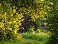 Σπίτια κρυμμένα πίσω από δέντρα - Σπίτια κρυμμένα πίσω από δέντρα.
