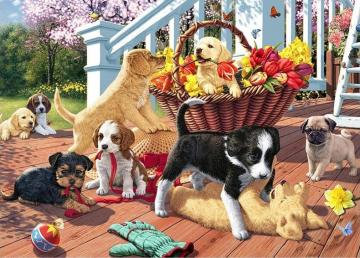 Charming dogs. - Animals. Charming dogs.