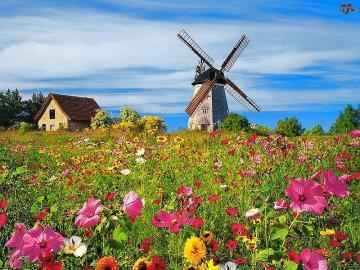 Windmill and Flowers. - Windmill and wildflowers.